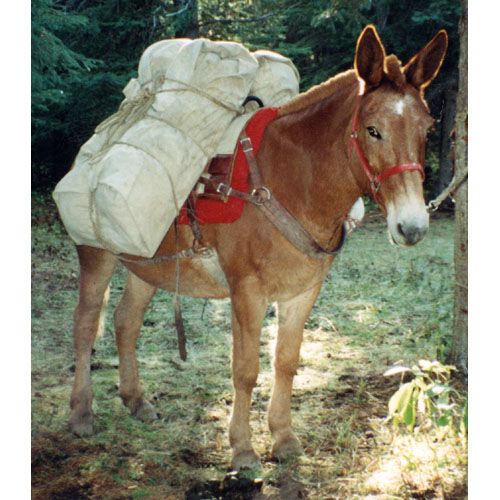 Camp Kitchen Checklist At Horse Packers Camp Supplies